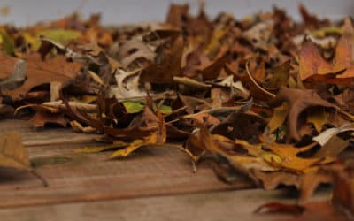 Leaves are Falling, Autumn is Calling!